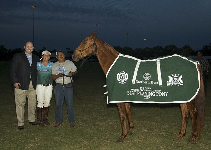 polo championship horse breed