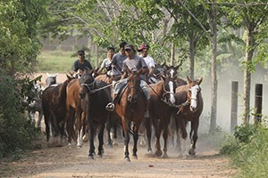 thailand polo school