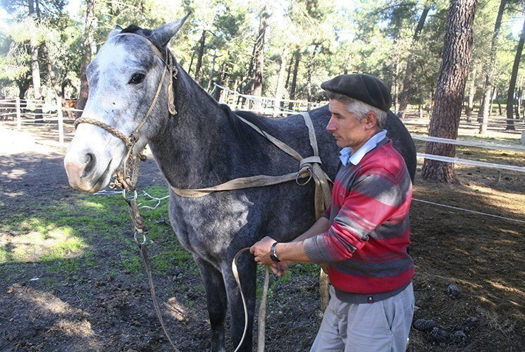 polo horse trainer spain