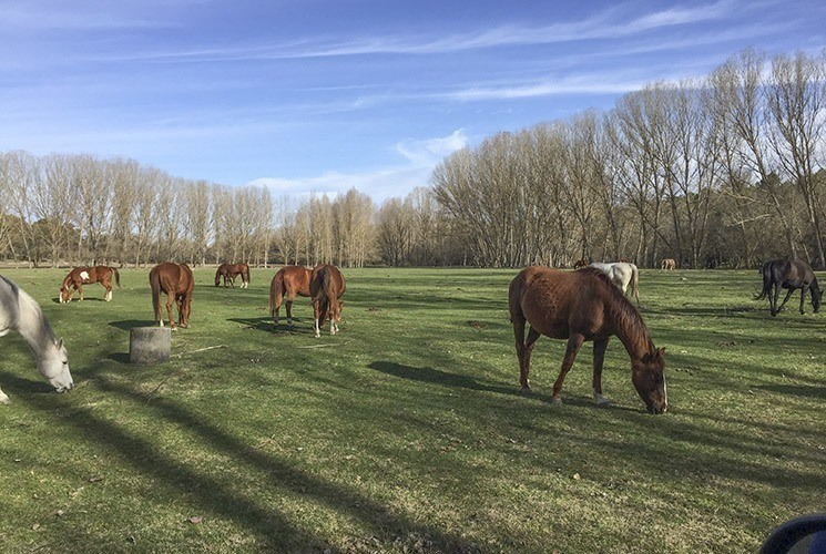 polo pony sale