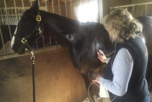 treatment-for-horses