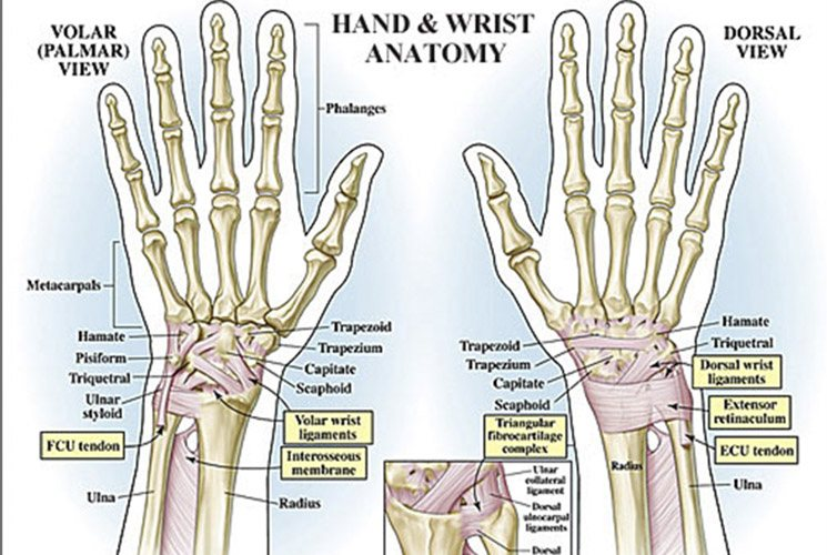 Common Wrist Injuries And Pain In Polo